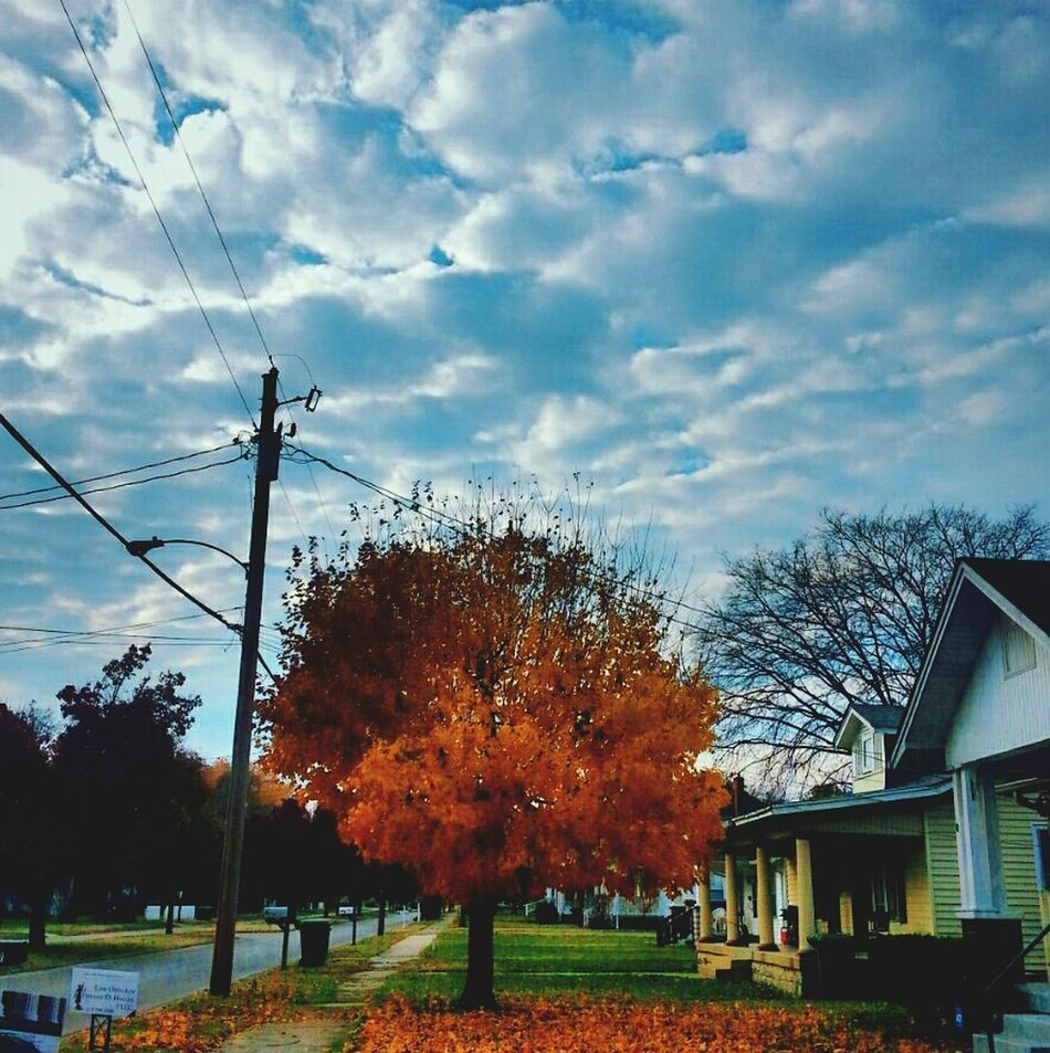 Lebanon Tennessee Tree And Sky Fall Colors