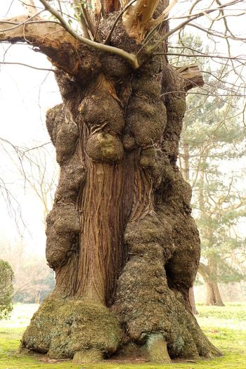 """""""Look deep into nature, you will understand everything better"""" Tree Nature Tree Trunk Growth Low Angle View No People Tranquility Outdoors Beauty In Nature Day Branch Close-up Sky Knotted Wood Huge"""