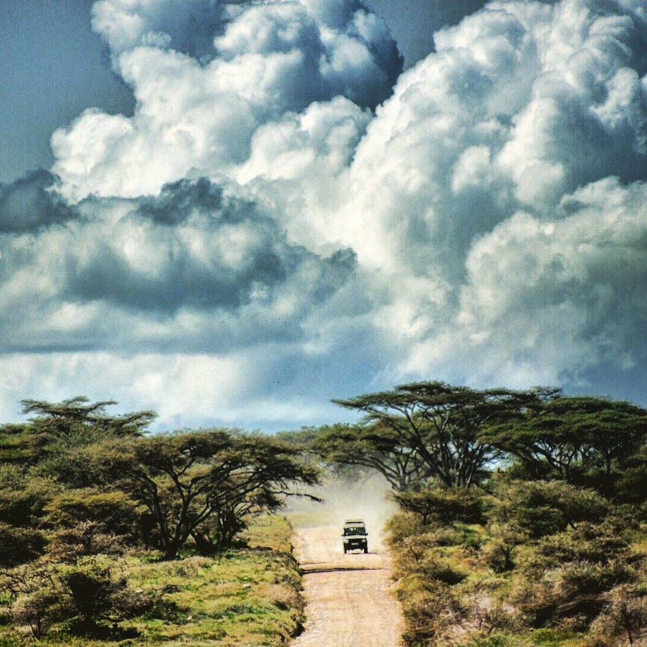 Safari Africa Storm