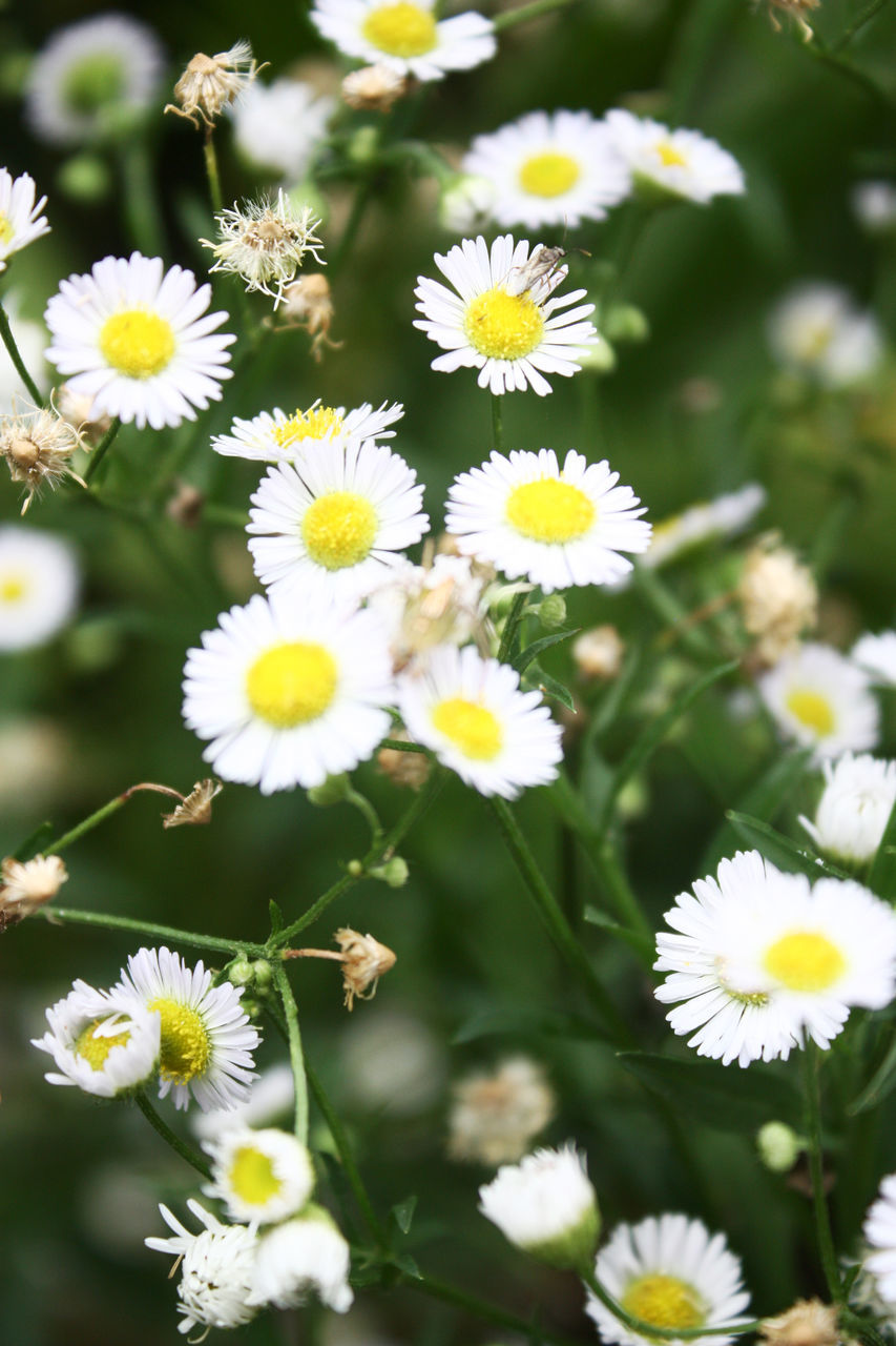 flower, petal, nature, fragility, flower head, beauty in nature, white color, yellow, freshness, growth, day, plant, no people, blooming, close-up, outdoors