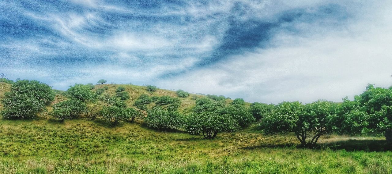 nature, tree, landscape, no people, field, beauty in nature, agriculture, growth, tranquility, grass, day, scenics, outdoors, sky