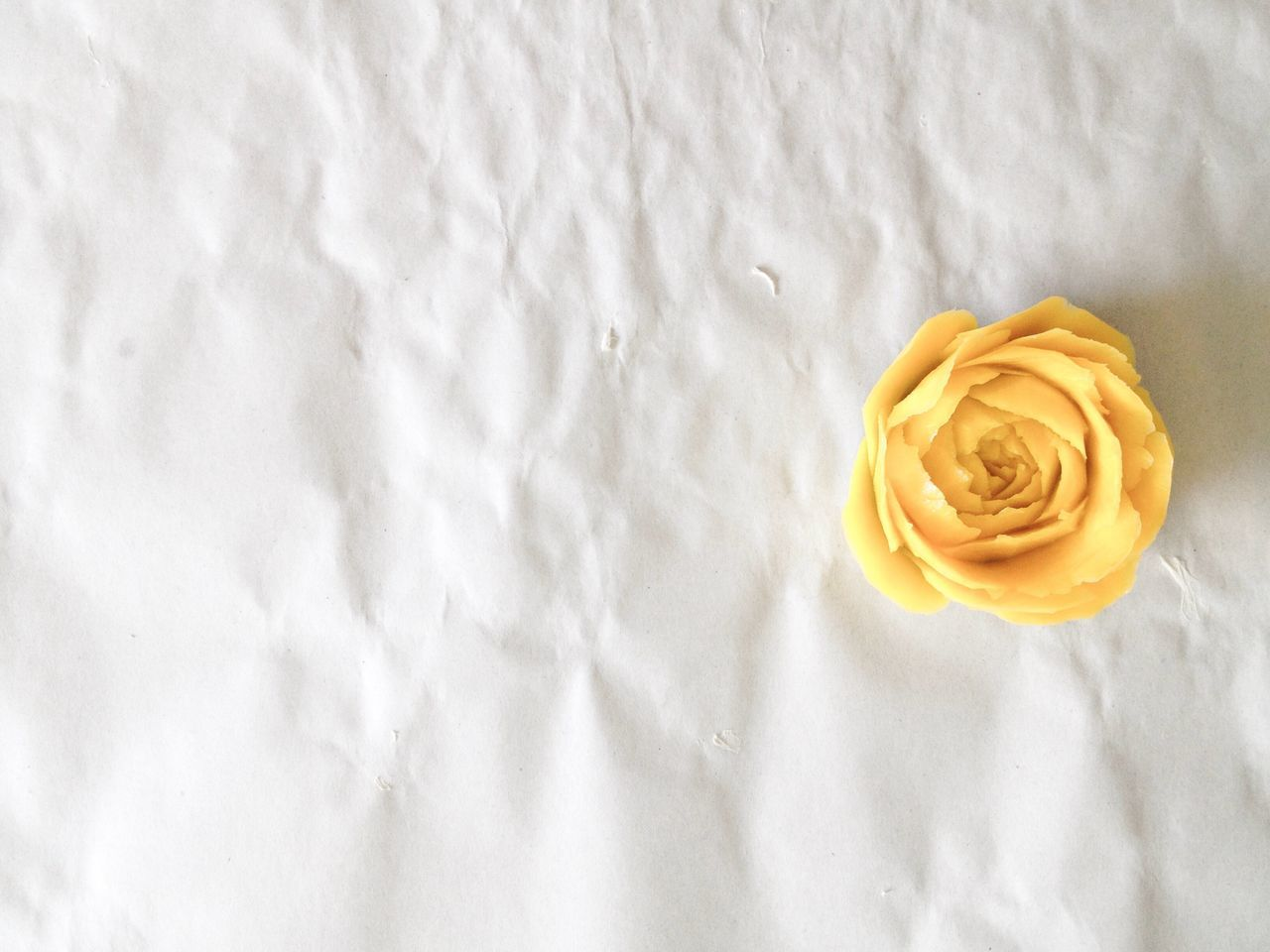 Carved rose from pumpkin Rose - Flower White Color No People Flower Freshness High Angle View Directly Above Carving Pumpkin Paper Yellow Rose Writing Valentine Relationship Indoors  Flower Head Fragility Close-up Nature Ready-to-eat Day
