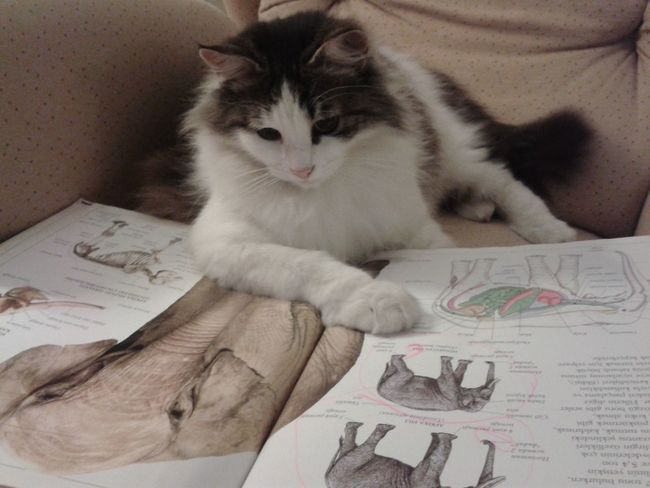 Oldies Animal Love Cat Catoftheday Books
