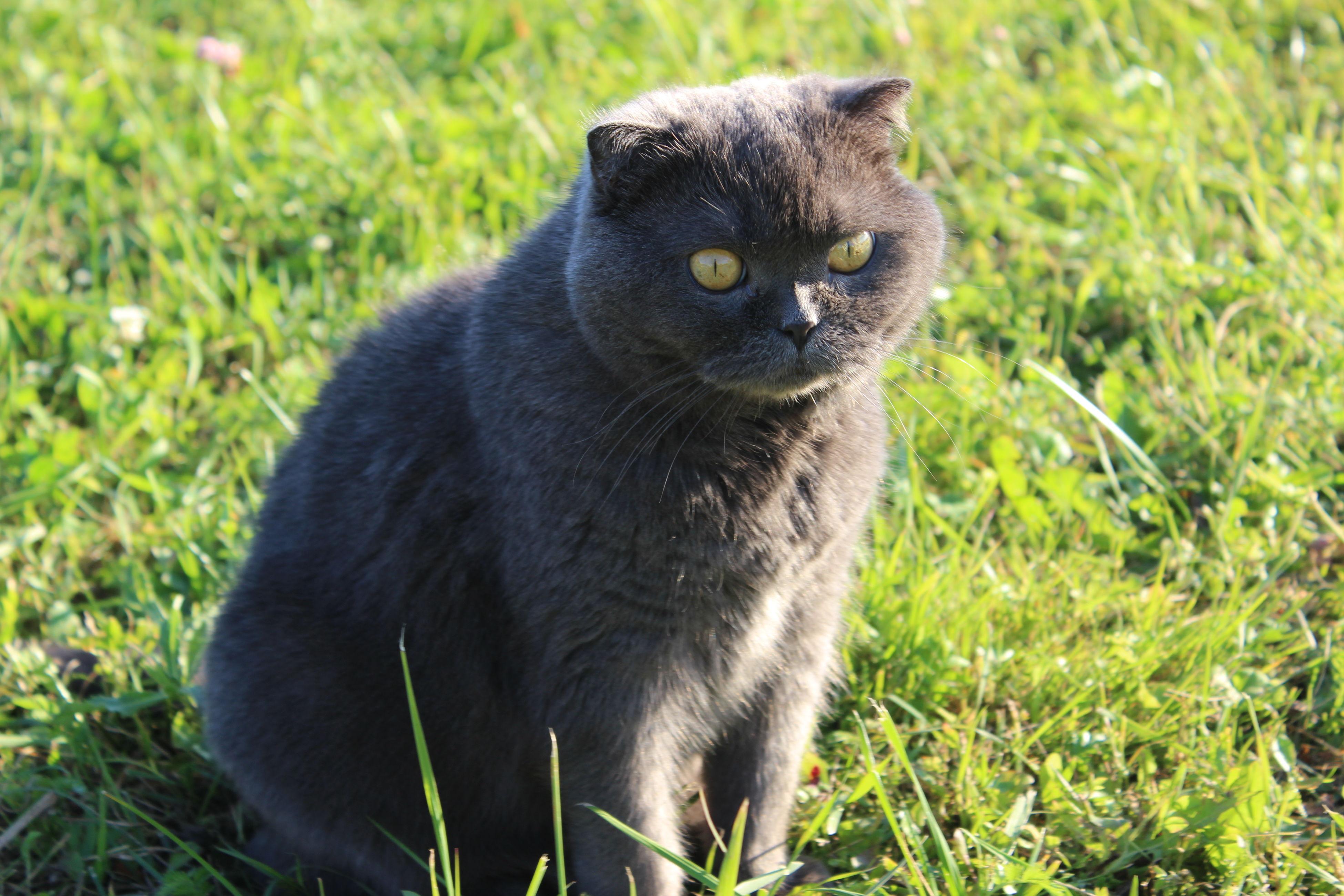 Animals Eyes Folded Kitty My Cat ^_^ Nice Nuture кошка