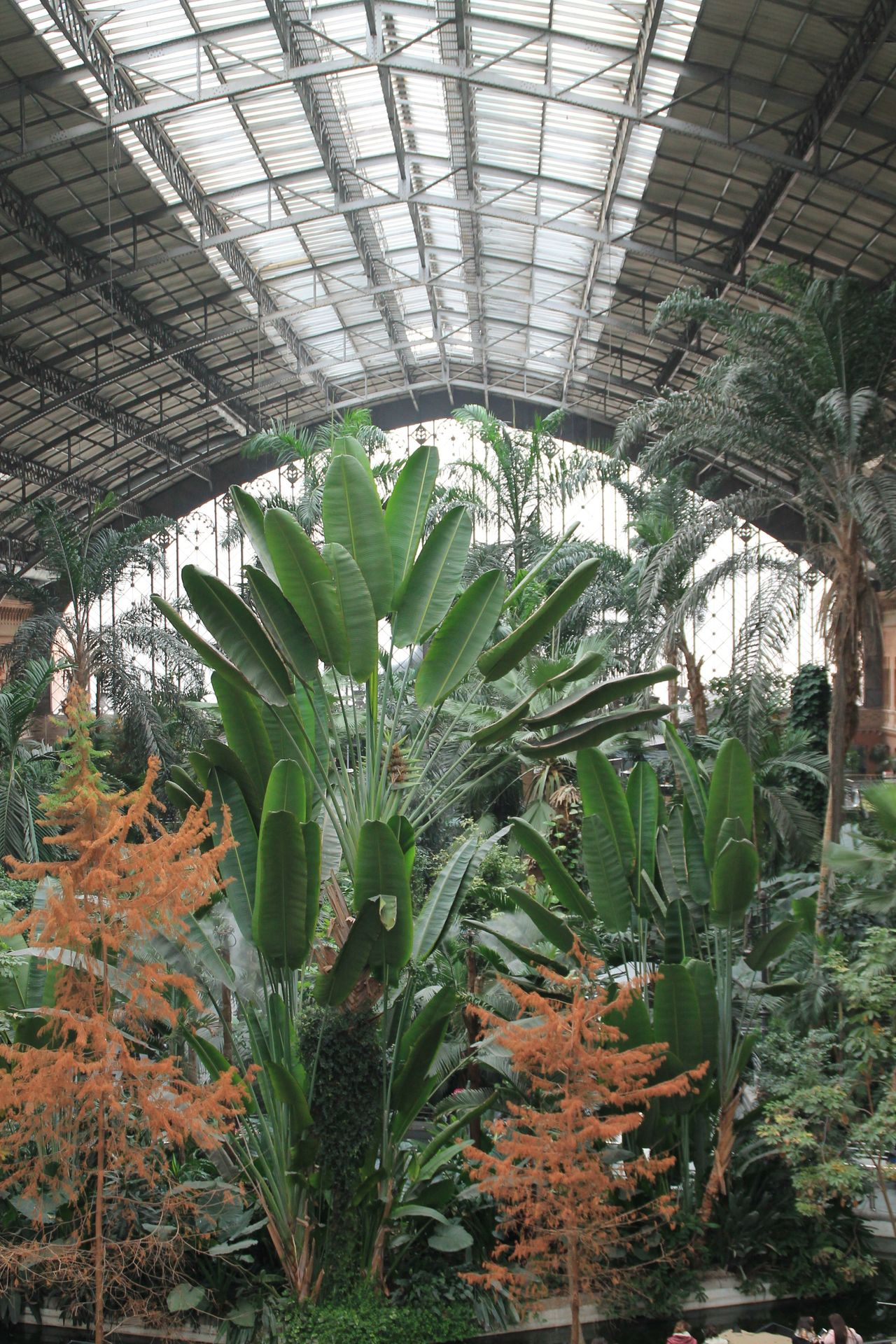 Growth Greenhouse Plant Leaf Agriculture Built Structure Indoors  Plant Nursery Green Color No People Nature Day Architecture Freshness Enjoying Life Hanging Out EyeEm Best Shots Taking Photos Check This Out Tropical Invernadero Train Station Atocha Palm Tree Architecture