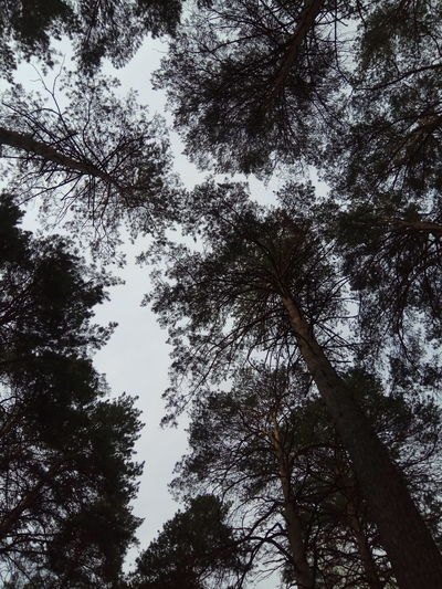 Low Angle View Tree Nature Forest Sky View From Above Low Angle View Beauty In Nature Solitude