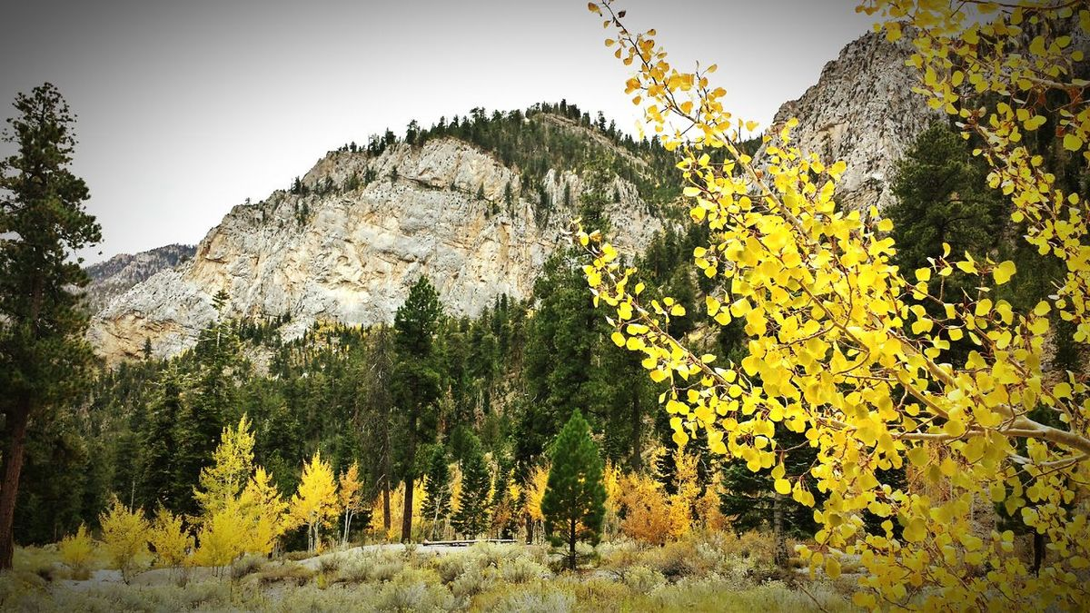 My Best Photo 2014 Mt Charleston Mountains Fall Colors Fall Leaves Fall_collection Miles Away