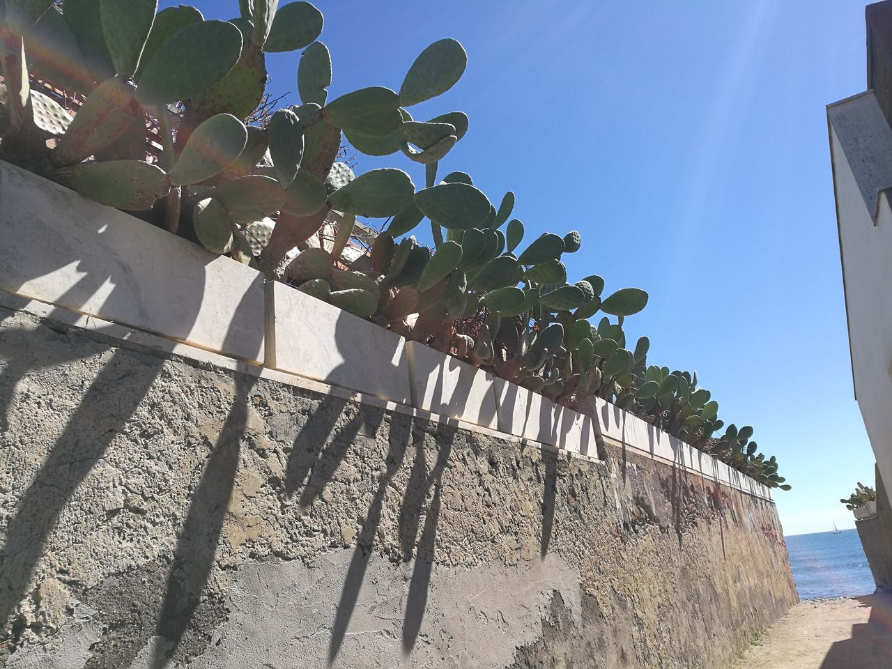 Blu Sky Clear Sky Day Low Angle View Nature No People Outdoors Sea Small Path Sunlight Sunny Day Wall Wall With Cactus