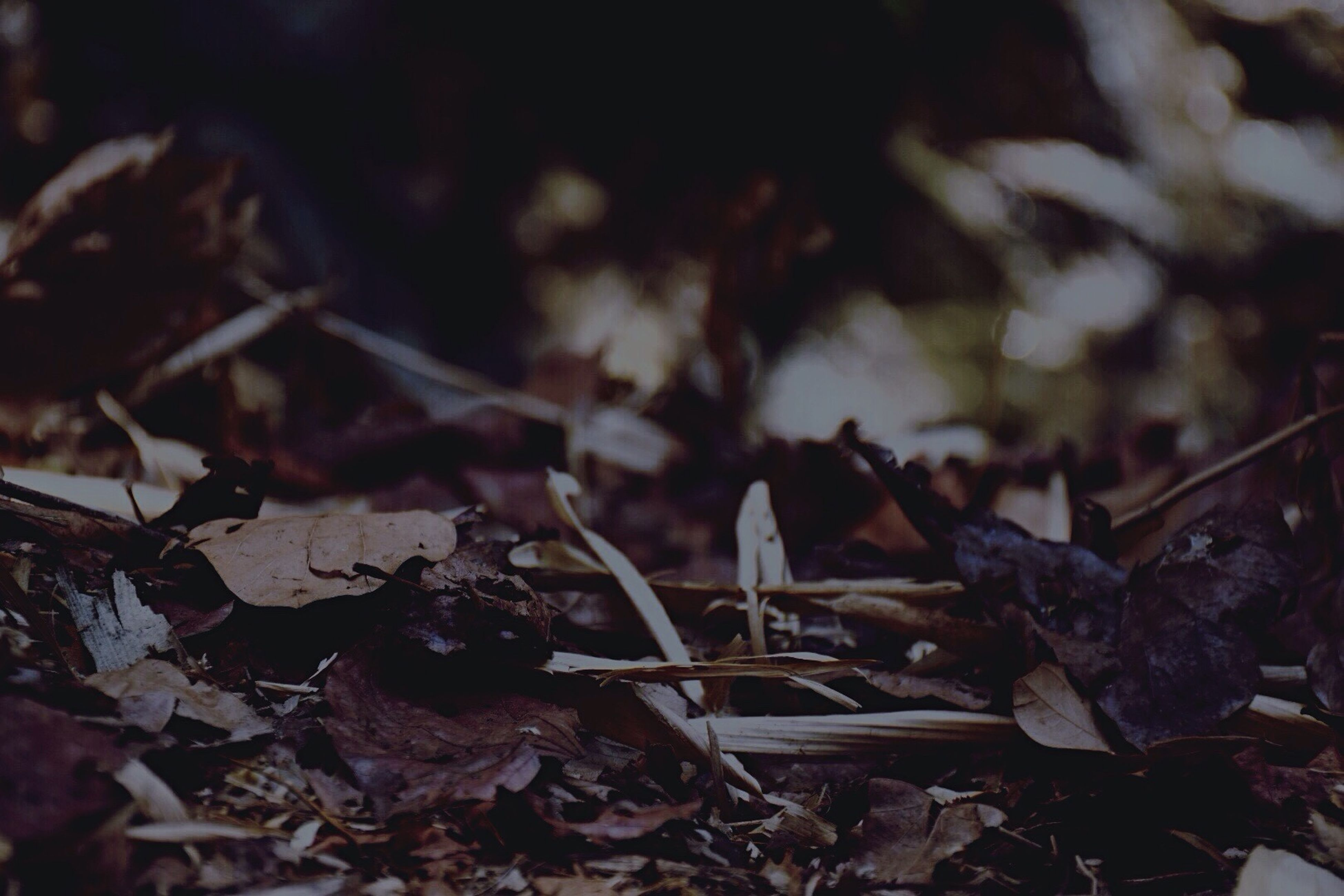 leaf, dry, close-up, focus on foreground, autumn, fallen, leaves, nature, field, selective focus, outdoors, day, change, high angle view, abandoned, no people, ground, season, damaged, messy