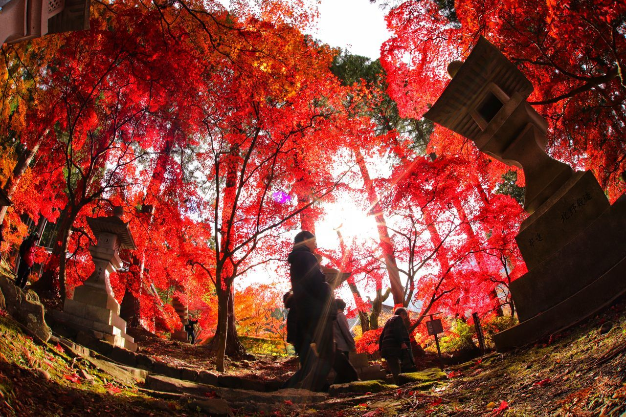 11月もラスト💦はやっ😨 See The Light Tree Autumn Red Outdoors Illuminated Leaf Nature Low Angle View Tranquility Growth People Branch Beauty In Nature Adult Day Sky One Person Only Men おはよー