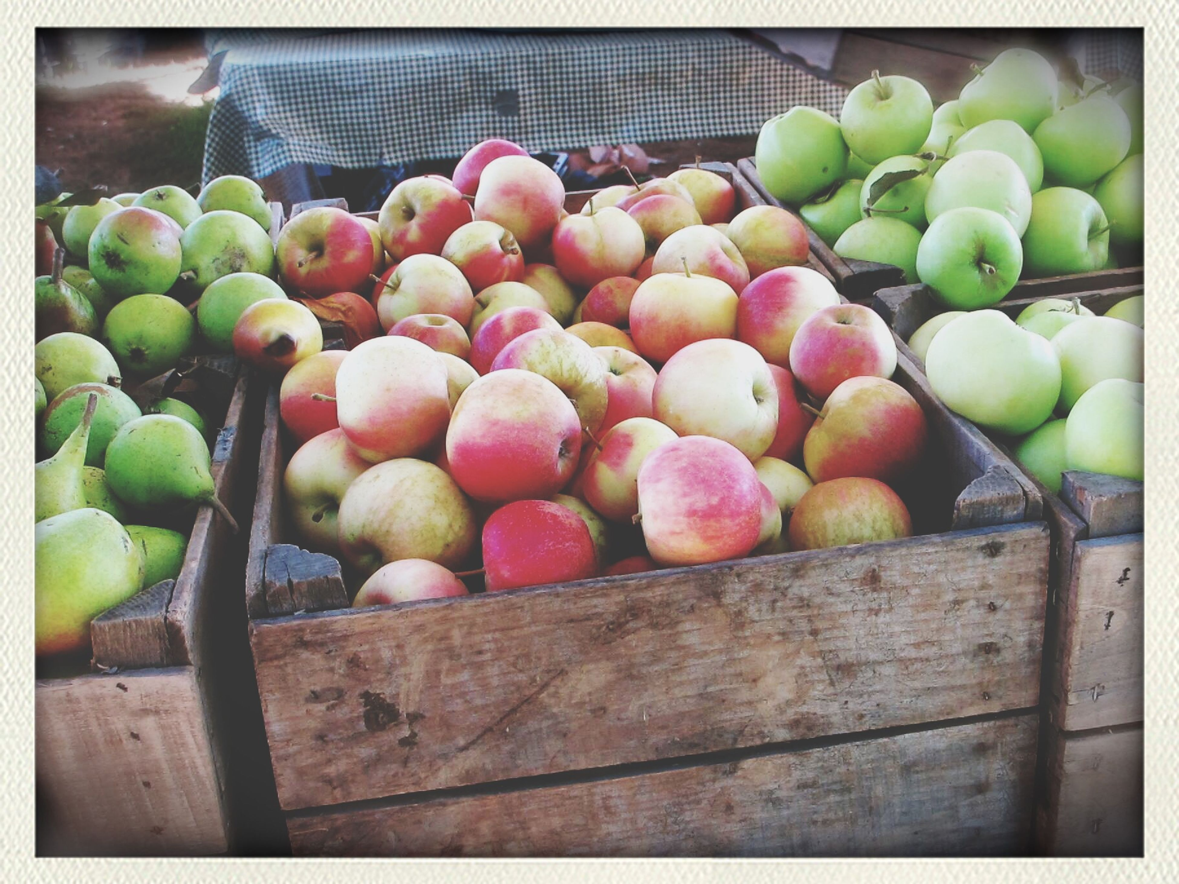 transfer print, auto post production filter, fruit, food and drink, food, green color, healthy eating, freshness, wood - material, large group of objects, close-up, abundance, indoors, day, no people, variation, apple, still life, organic
