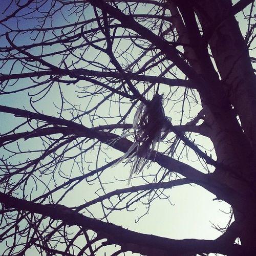ცელოფნის ჩიტი. The polyethylene bird. Tree Plyethylene Bird Trash branches