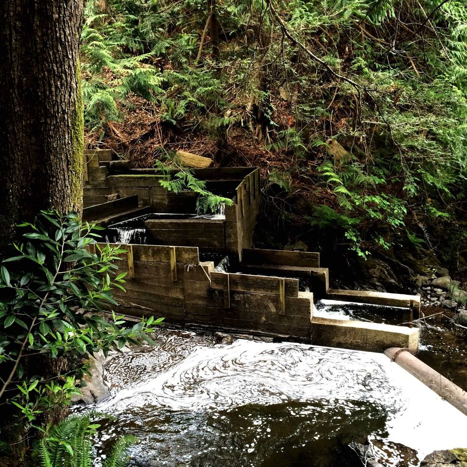 Relaxing Bowen Island Waterfall Hello World Travel Escaping Into The Wild Wanderlust. Vancouver Wanderlust