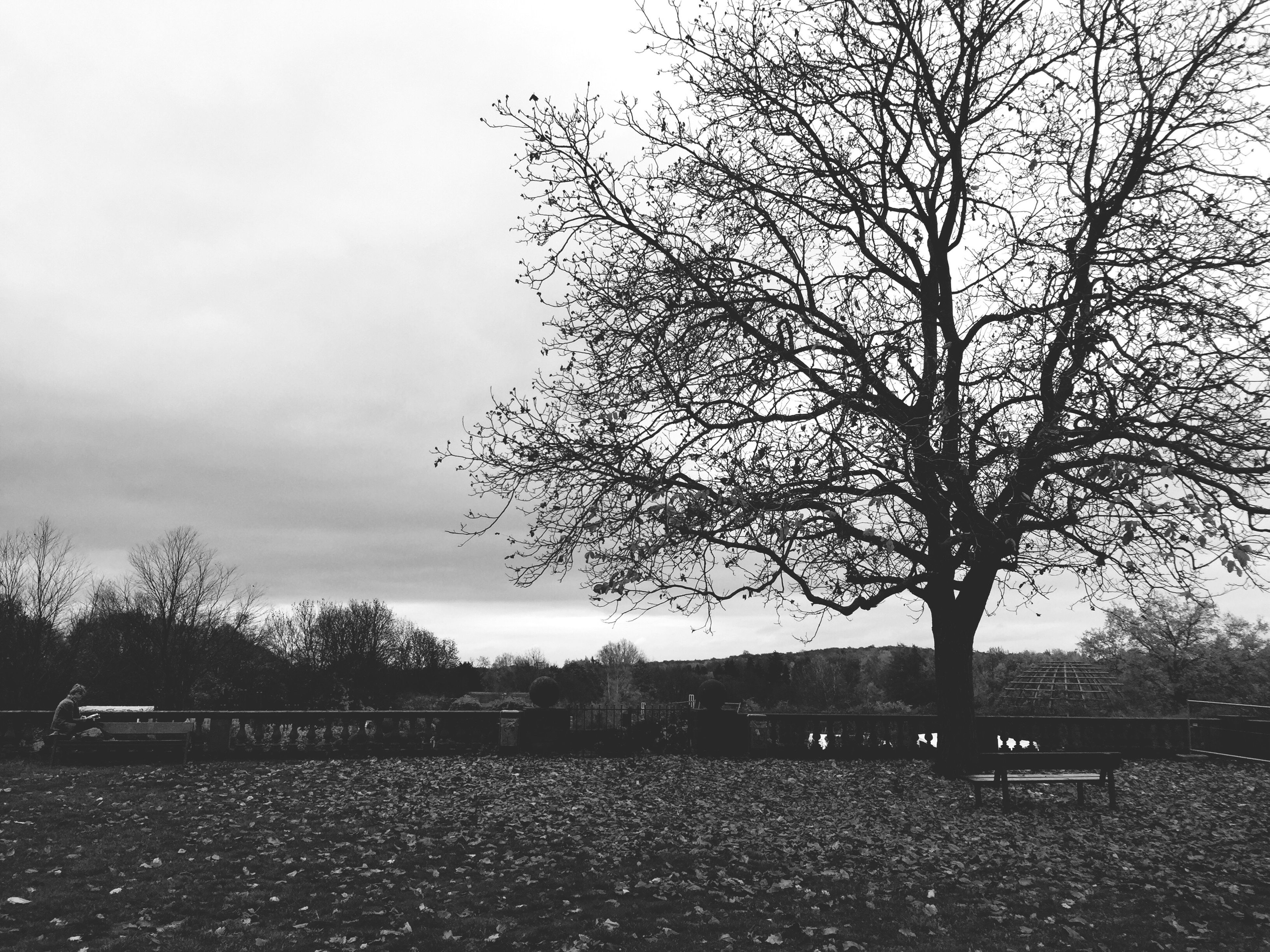 tree, bare tree, tranquility, tranquil scene, sky, branch, landscape, field, nature, scenics, beauty in nature, growth, non-urban scene, outdoors, day, no people, tree trunk, remote, cloud - sky, single tree
