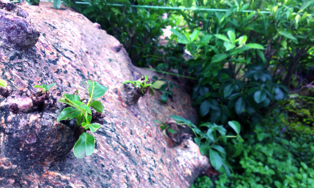 plant, growth, leaf, nature, green color, no people, outdoors, day, close-up, beauty in nature, animal themes, freshness