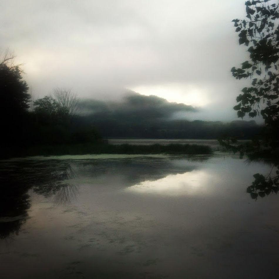 Nature Swamp Sunrise