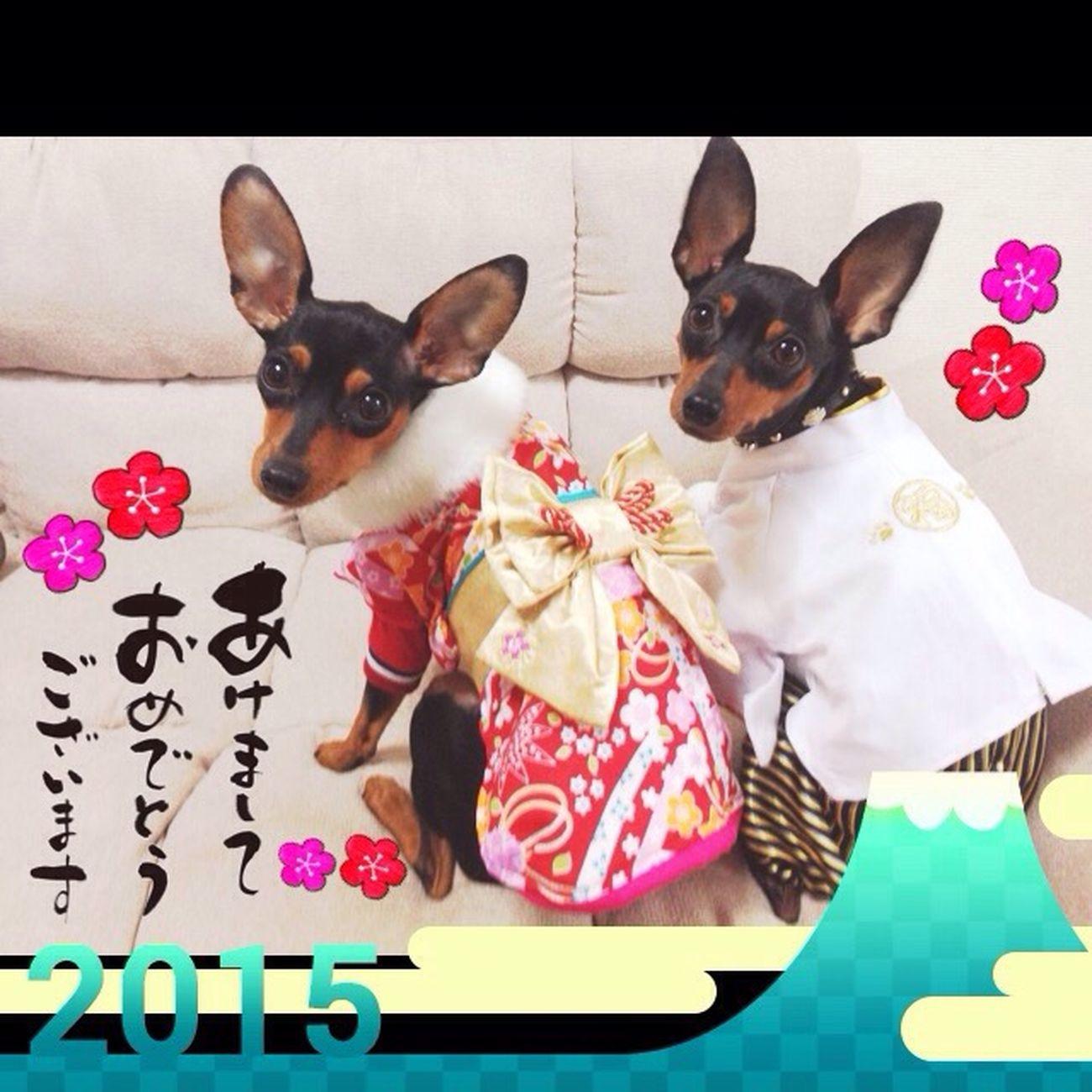 Happy New Year Minipincher Hello World I Love My Dog