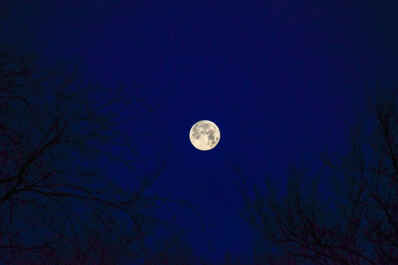 moon, full moon, night, planetary moon, nature, bare tree, beauty in nature, moon surface, low angle view, astronomy, tranquility, moonlight, half moon, scenics, tranquil scene, tree, sky, no people, outdoors, crescent, branch, clear sky