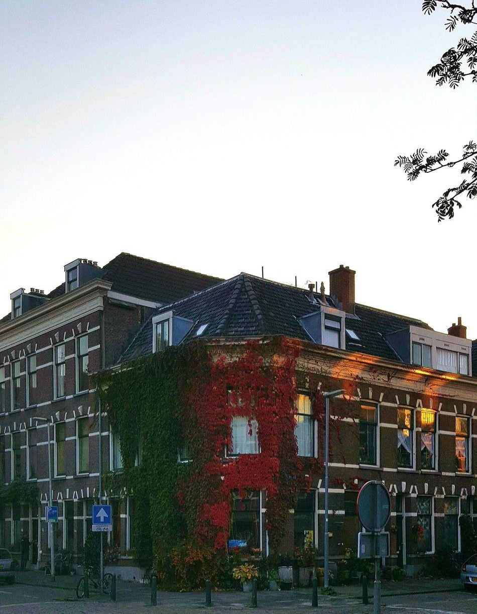 Walking Around Urbanphotography Taking Photos City Dutch Cities Neighborhood Dutch House Green Red Sunset