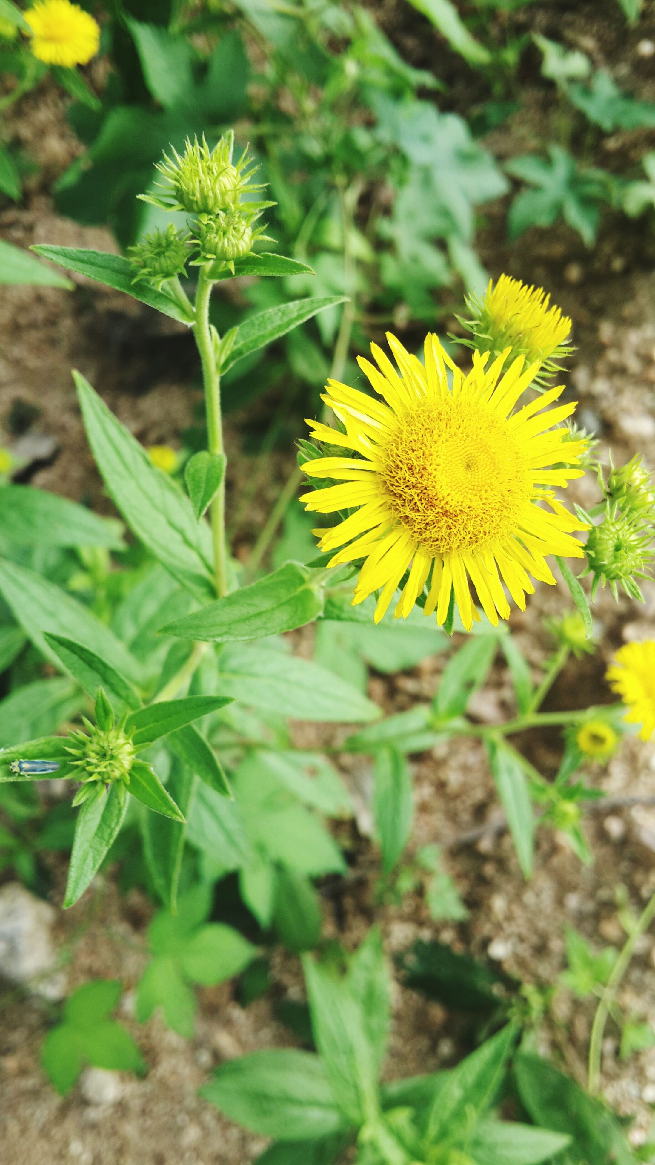 flower, insect, animals in the wild, one animal, animal themes, wildlife, yellow, fragility, petal, growth, freshness, focus on foreground, pollination, plant, flower head, beauty in nature, nature, close-up, bee, symbiotic relationship
