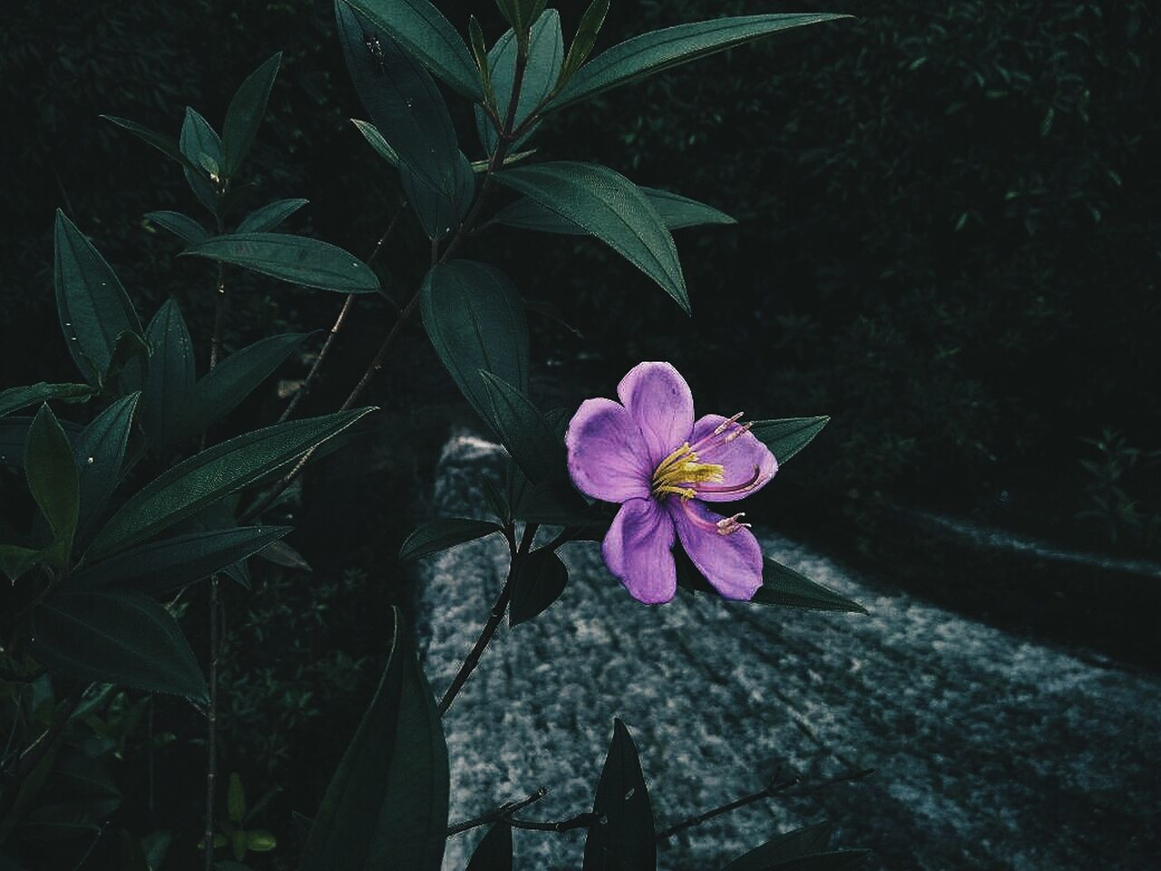 Dangerous woman First Eyeem Photo Outdoors Flower Darktones Nature Waterfall EyeEmNewHere