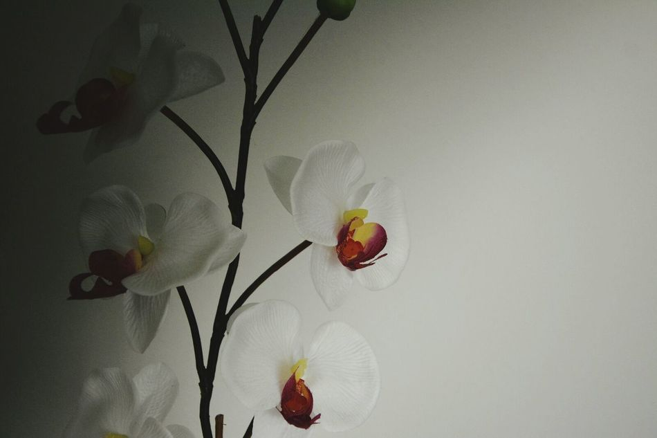 Darkness And Light Camera Practice No Additional Filter ND-Filter Enjoying The Moment Indoor Photography Plastic Orchids
