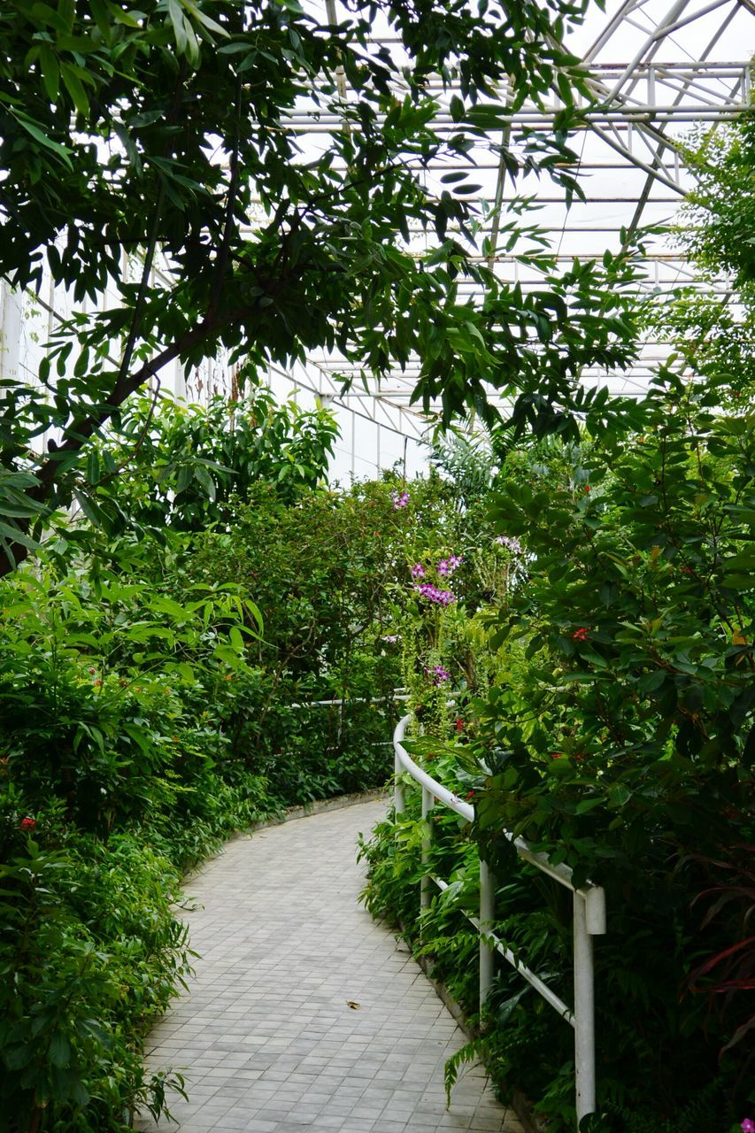 Footpath Amidst Plants At Park