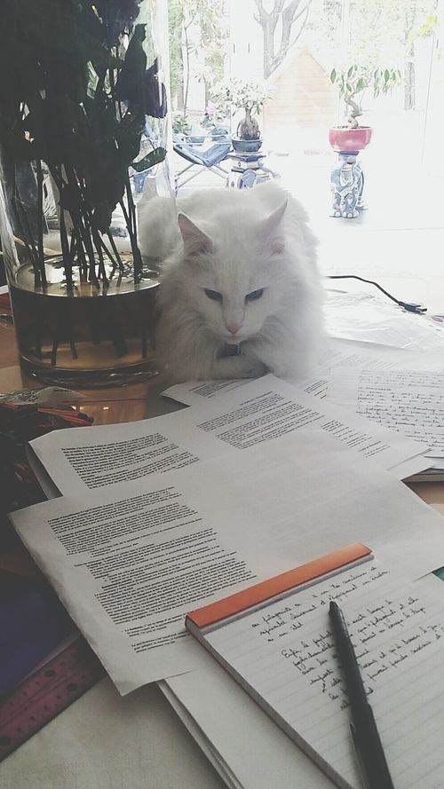 Cat♡ Studying Playing With The Animals EyeEm Animal Lover Beautiful Im Beautiful Fluffy Cat