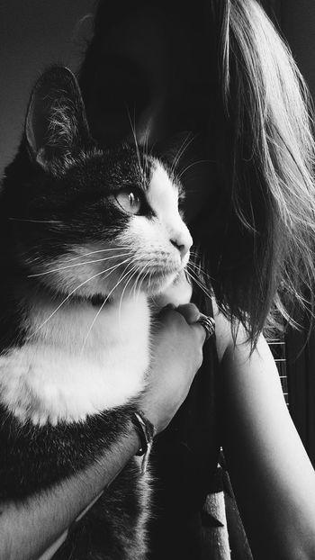 My pretty cat. ♡ Enjoying Life Taking Photos Cat Hello World