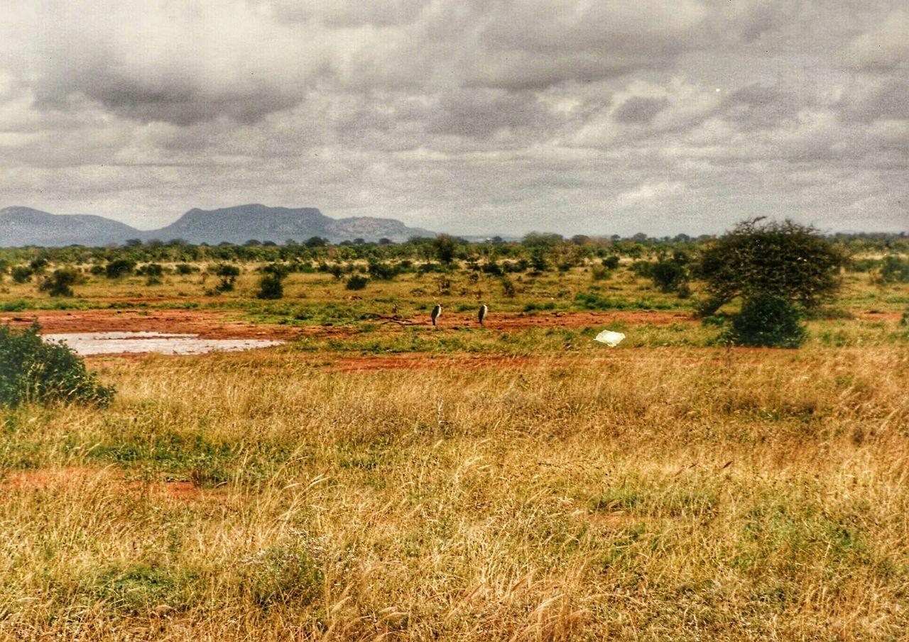 Landscape_photography Wildlife Photography Masai Mara Safari Africa Kenya UFO Sky Skyporn Landscape Landscapes Wildlife & Nature Nature Photography Clouds And Sky Sky And Clouds Landscape_photography Landschaft Landscape_photography Landschaften Landscape_photography Landscapes With WhiteWall Tsavo