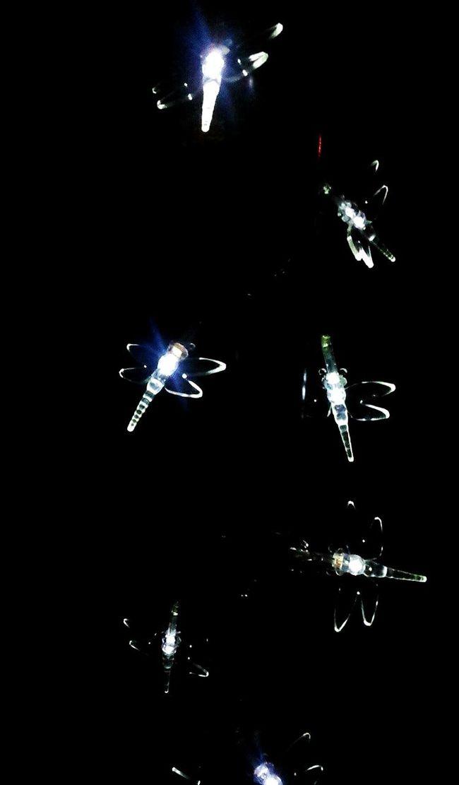 Taking Photos Check This Out Relaxing Enjoying Life Gardenlight Beaitiful Moment Beautiful Night Light And Shadow Light Up Your Life Light And Dark Garden Photography Garden Decor