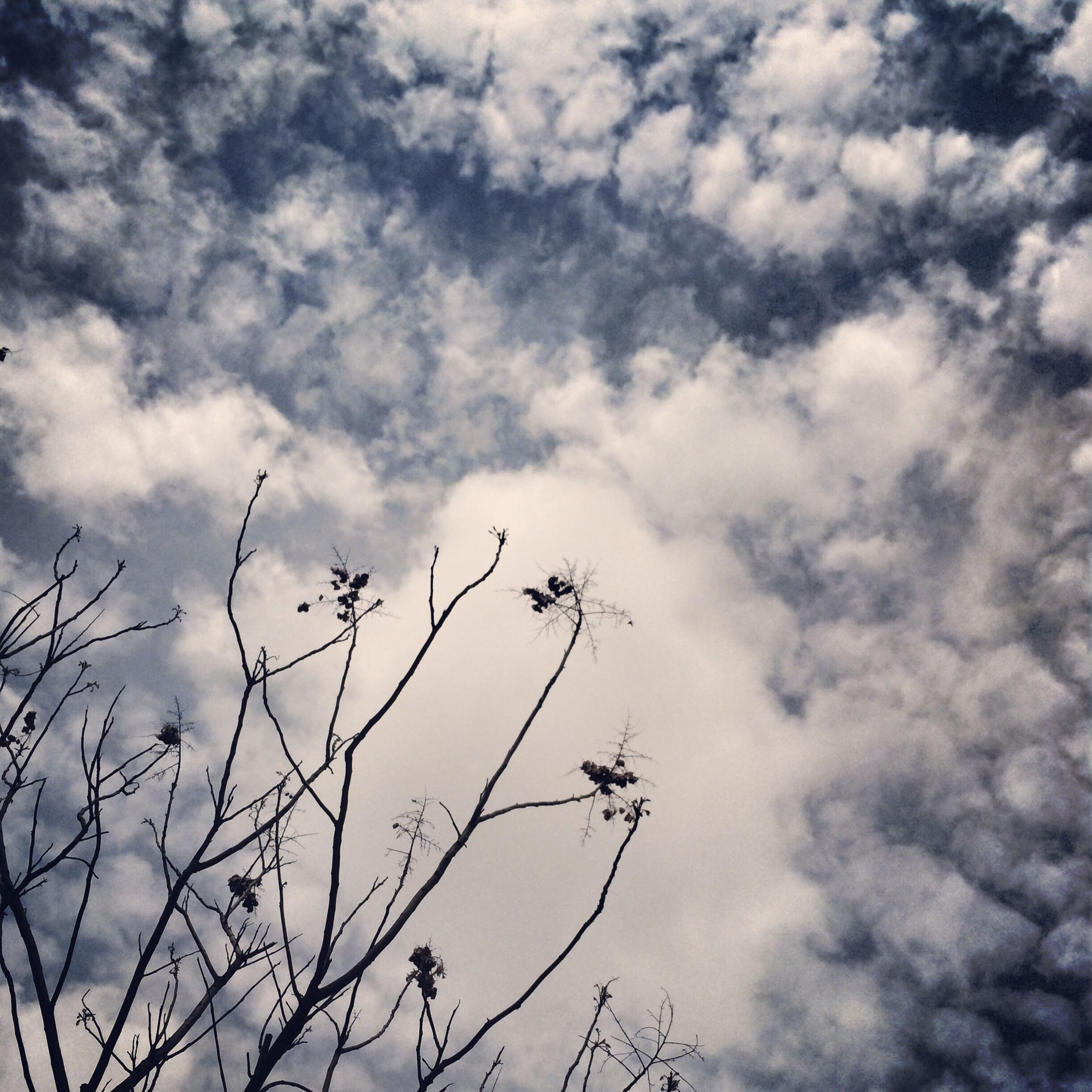 sky, low angle view, cloud - sky, cloudy, nature, tranquility, beauty in nature, branch, cloud, tree, scenics, bare tree, growth, tranquil scene, outdoors, day, silhouette, no people, weather, overcast