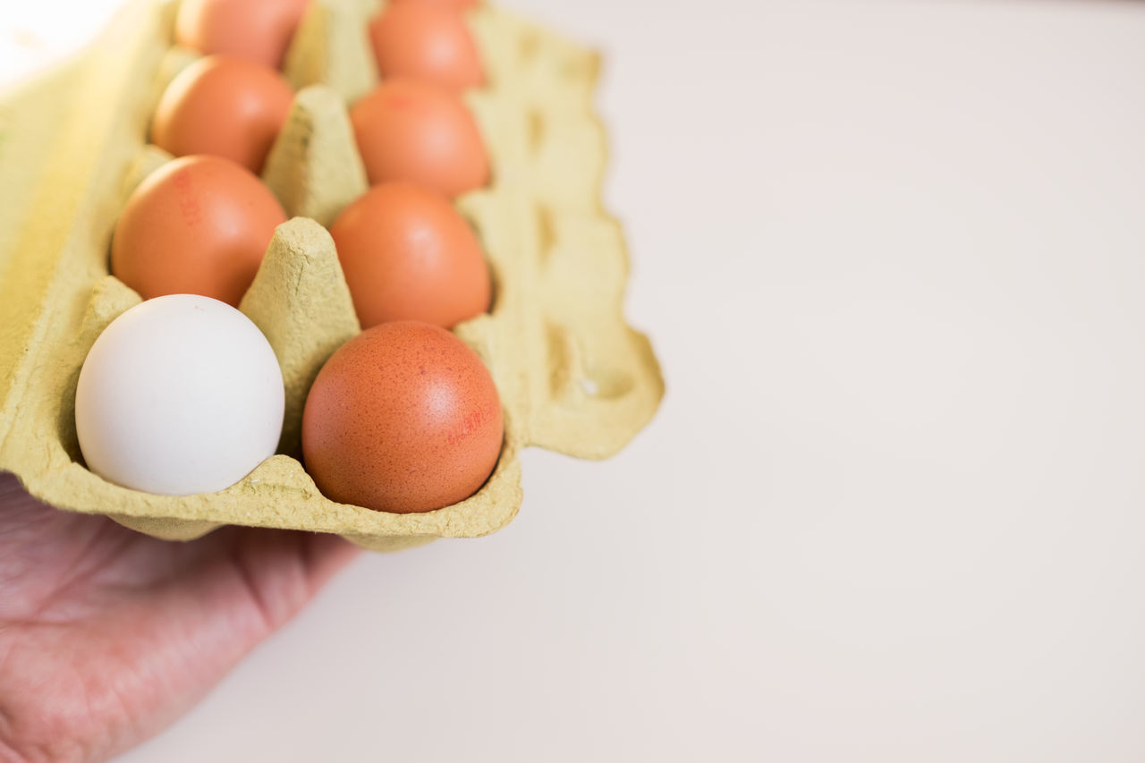Brown Copy Space Day Egg Egg Carton Food Fragility Freshness Healthy Eating Human Body Part Human Hand Organic Food Stand Out From The Crowd White Background White Color