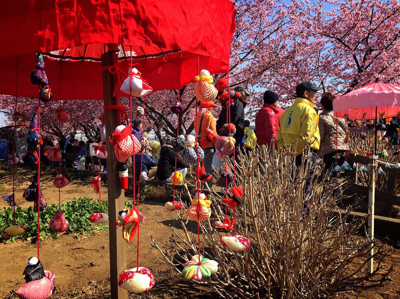 Sakurafestival Cherry Blossoms Festival Spring Sakura Tsurushibina Goodday✌️ Enjoy Life