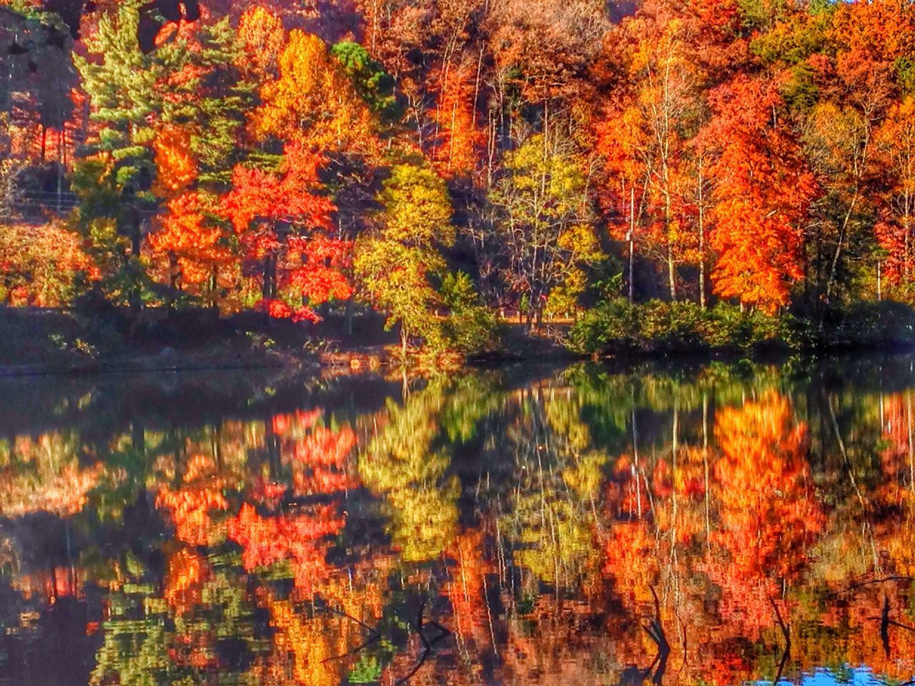 Reflection Of Autumn Forest