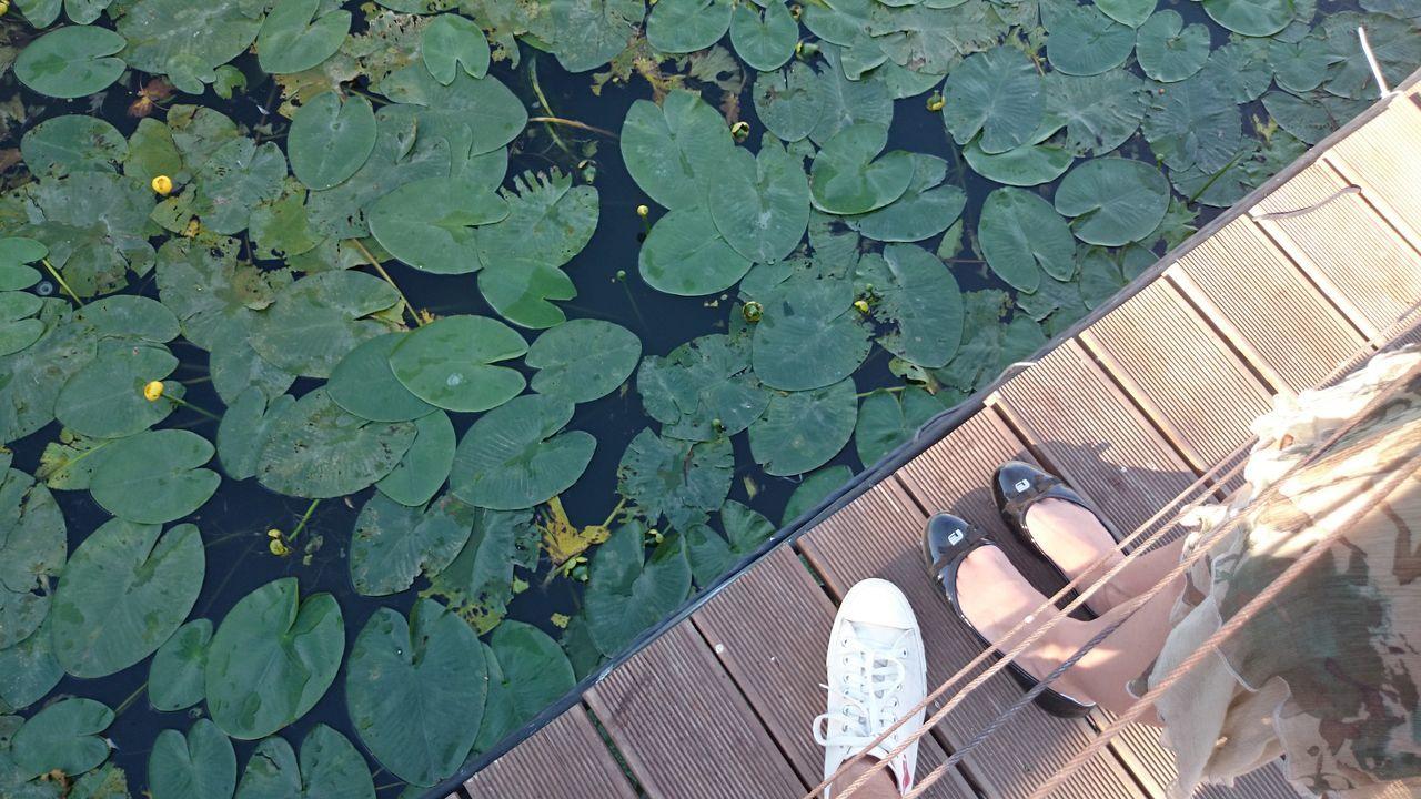Water Lilies Feet Boardwalk Summer