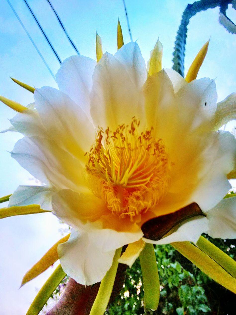 I Love Cactus Orquideas Flower Porn Flower Collection Flor De Una Sola Noche EyeEm Flower