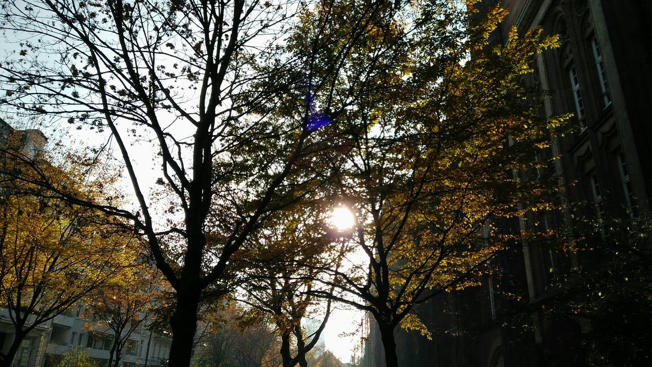 Early Winter Sun. · Hamburg Germany 040 Hh Schlüterstraße Trees Framed By Trees Branches Leaves Leaves 🍁 Winter Sun Nature Low Angle View Cold Day Gray Sky Overcast