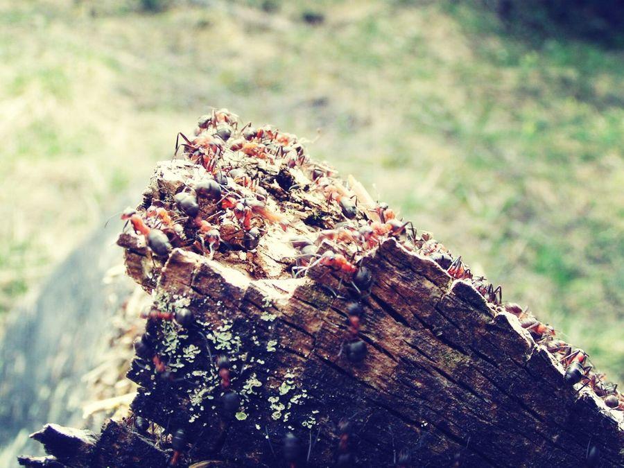 Lina's Ameisen beim sonnen ?