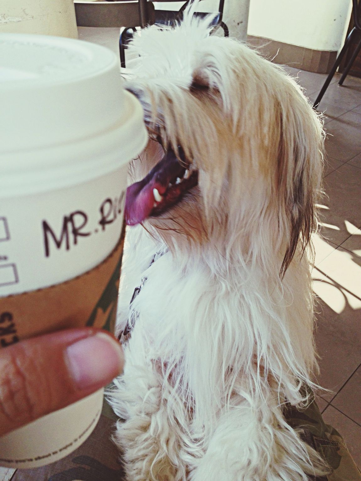 Cafe Latte Drinking A Latte Enjoying Life My Dogs Are Cooler Than Your Kids Just Around The Corner