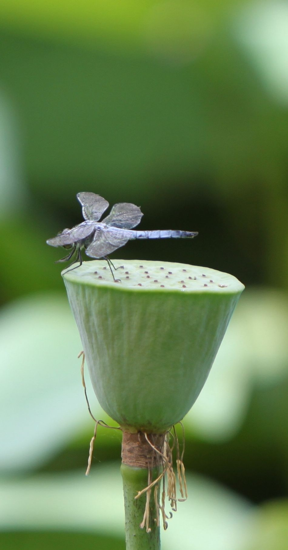 Old Summer Palace Historical Place Park Nature Plants Dragonfly Dragonfly On Plant Green