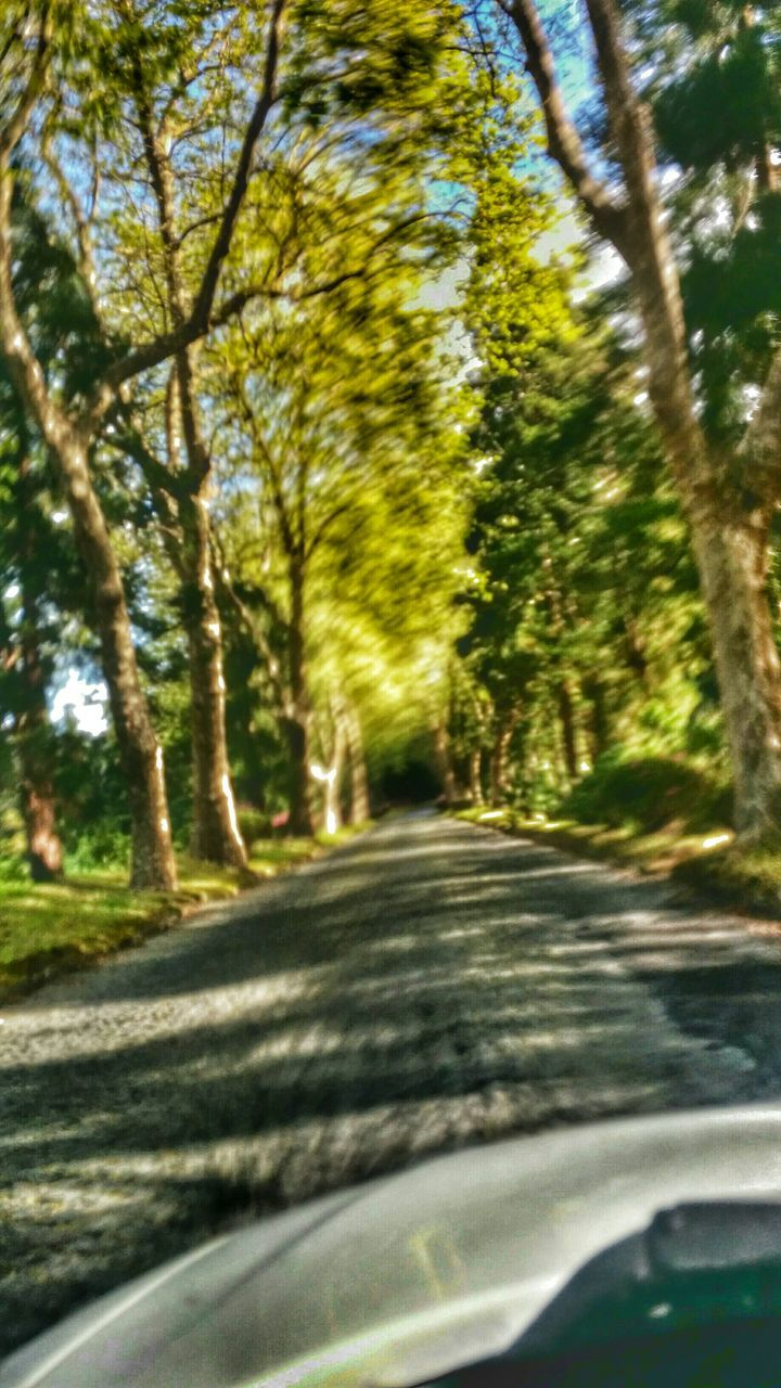 road, transportation, the way forward, car, tree, nature, day, no people, car point of view, curve, scenics, outdoors, beauty in nature, sky
