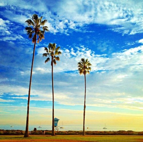 Left my heart in California... Wanderlust The Traveler - 2015 EyeEm Awards The Great Outdoors - 2015 EyeEm Awards California Traveling Travel Photography Throwback Sunset #sun #clouds #skylovers #sky #nature #beautifulinnature #naturalbeauty #photography #landscape Palm Trees EyeEm Best Shots