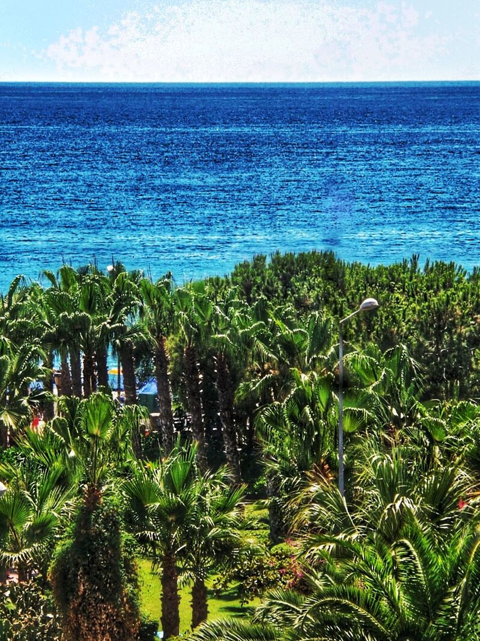 my Side Sea View 😉 Palm Grove In The Foreground Blue Sea & Blue Sky No People Outdoors Cleopatrabeach Alanya/Turkey Green Palm Trees And Blue Sea All Shades Of Blue Holidays