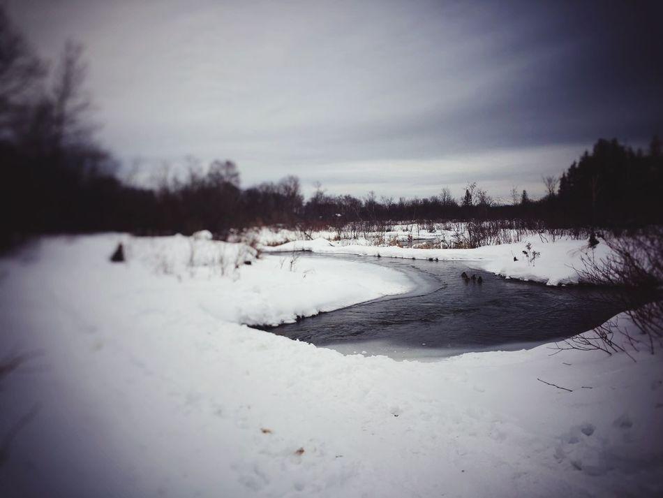 Winter Snow Nature Scenics Landscape Cold