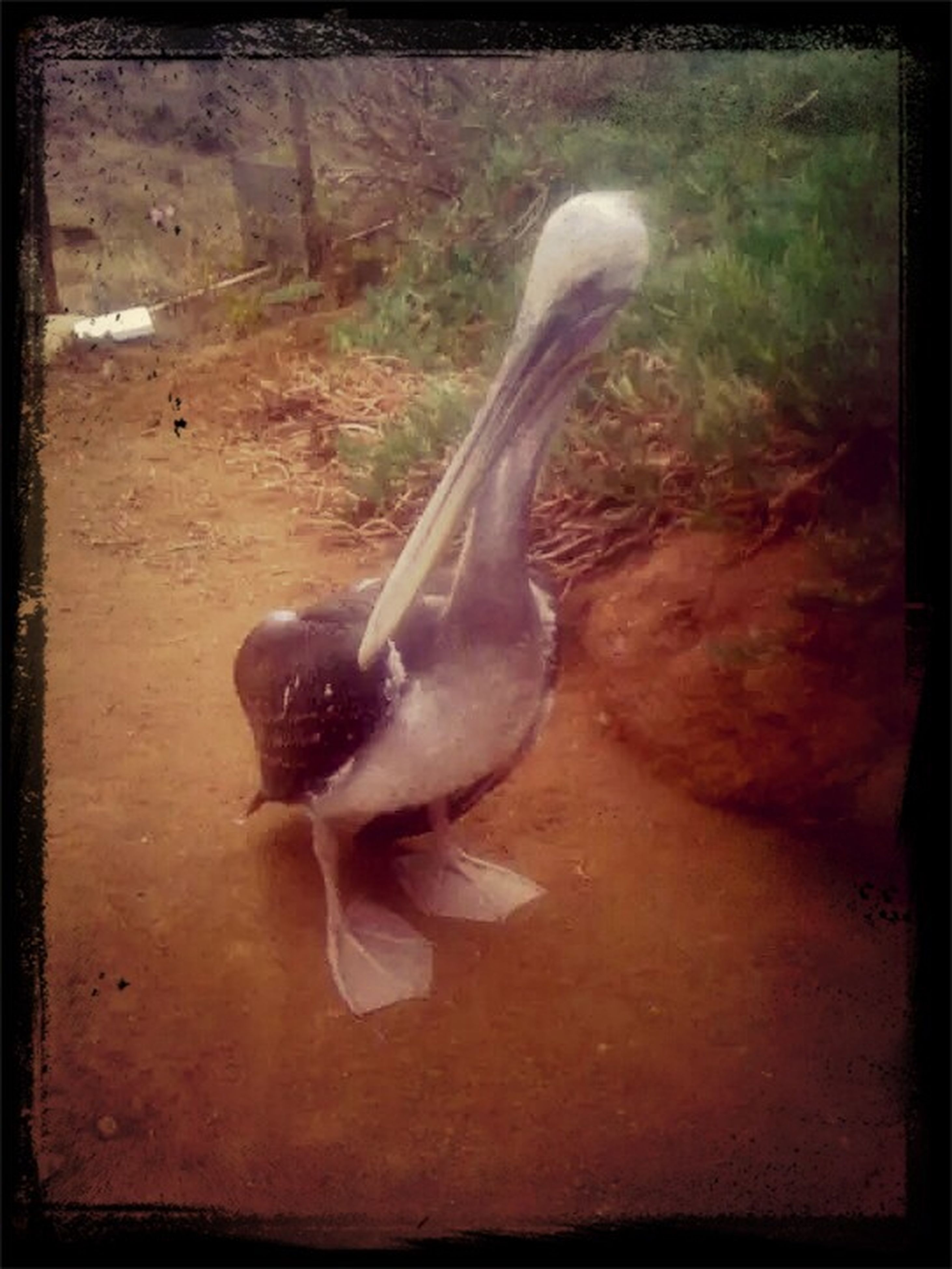 transfer print, auto post production filter, animal themes, bird, one animal, wildlife, animals in the wild, full length, high angle view, no people, sunlight, day, outdoors, nature, side view, close-up, shadow, field, motion, two animals