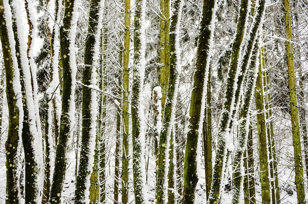Wintertime ⛄ Environmental Conservation Cold Temperature Winter Season  Enjoying Winter No People Outdoors Nature Beauty In Nature Tree Woods Into The Woods Winter Trees A Walk In The Woods Week On Eyeem Pattern Pieces