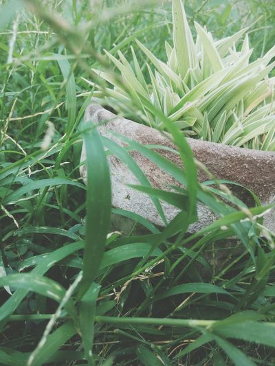 Nature Gogreen Love