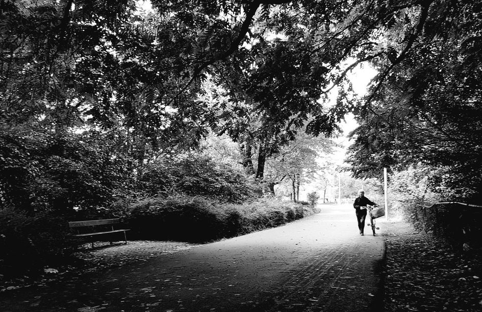 Afternoon walk Outdoors Blackandwhite Blackandwhite Photography Daytime Parks People And Places Shadows & Lights Shapes And Forms Silhouette Nature Walking LoveNature Amsterdamthroughmycamera Amsterdam Life Nofilter Pretoebrancofotografia Parques  Fotografia Luz E Sombra Silhuetas Welcome To Black