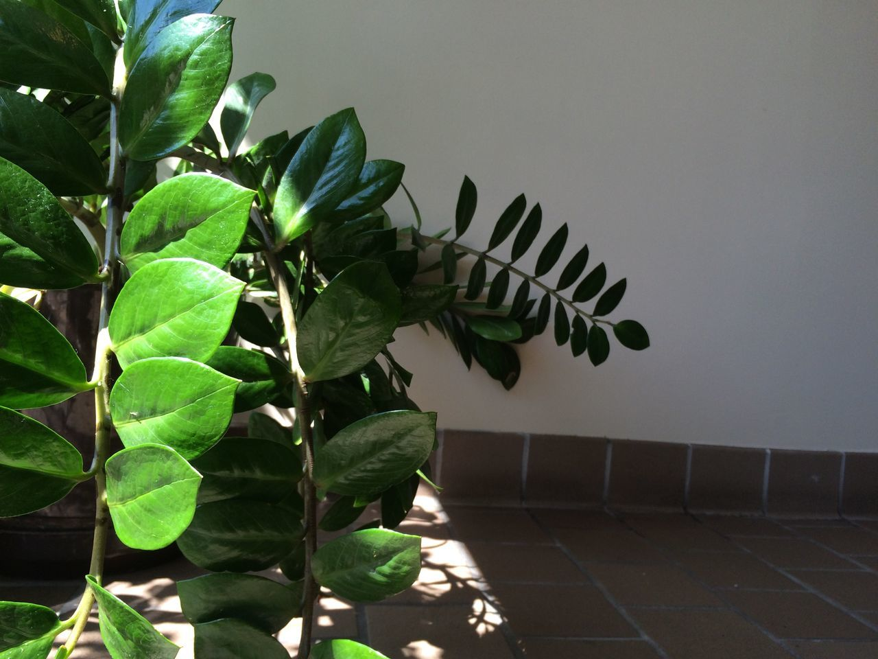 leaf, growth, plant, green color, nature, no people, beauty in nature, day, outdoors, close-up, tree, freshness